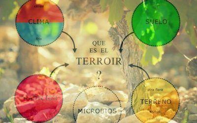 ¿Qué es el Terroir (Terruño)?