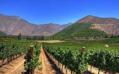 El Terruño del Vino – Región de Coquimbo